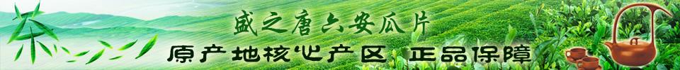 盛之唐六安瓜片 原产地核心产区