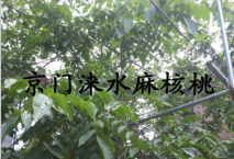 爱拼官网爱拼娱乐爱拼娱乐官网结果大树