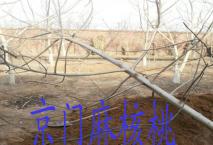 北京朋友前来购爱拼娱乐爱拼娱乐官网结果大树